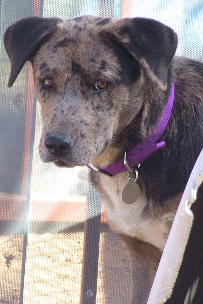 Green Valley Dog Rescue